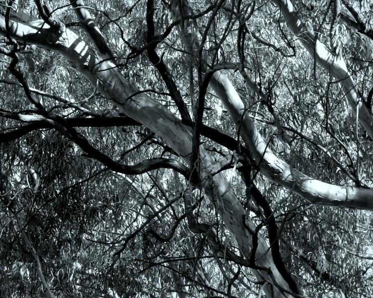 Intertwining - #digitalart, trees - elinorekoenigsfeld | ello
