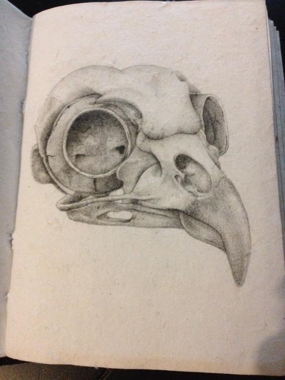 sketch vintage paper - bird, skull - katmay | ello