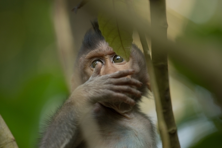 Balinese Monkey - monkey forest - misterpeekaboo | ello