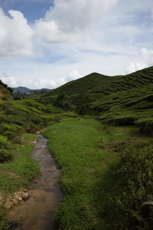 Tea plantation - Malaysia, Came - misterpeekaboo | ello