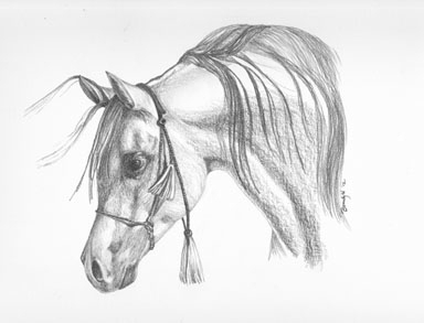 'Arabian - drawing - brandyhouse | ello