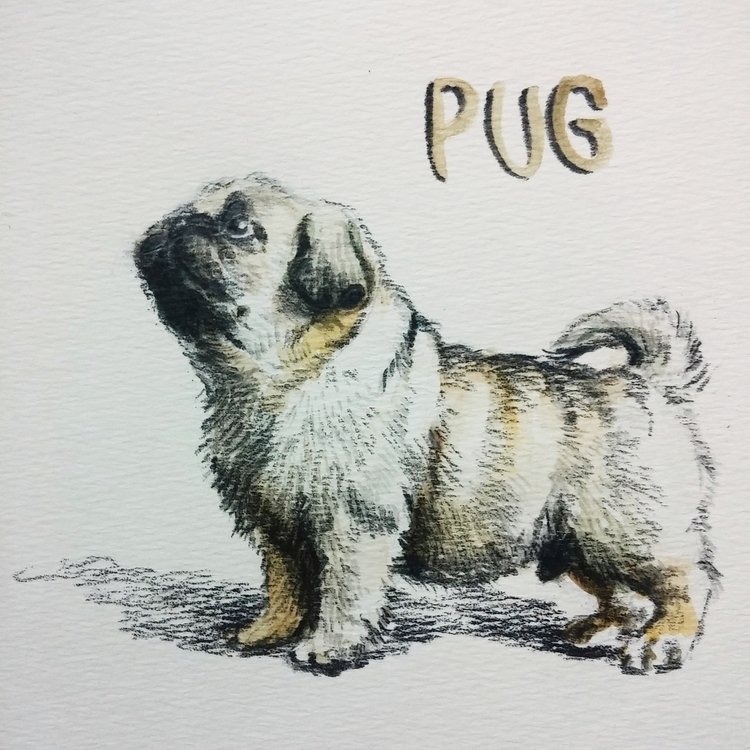 Pug - dog, pug, aquarelle, pencil - prianikn | ello