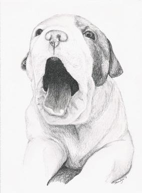 'Puppy Yawn - drawing - brandyhouse | ello