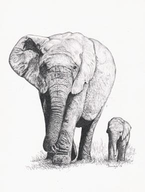 'Elephant Walk - drawing - brandyhouse | ello