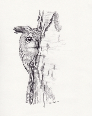 'Peeking Owl - drawing - brandyhouse | ello