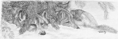 'Wolf Pups - drawing - brandyhouse | ello
