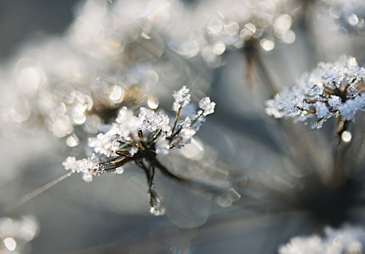 Soft Diamonds - photography, frost - cliveayron | ello