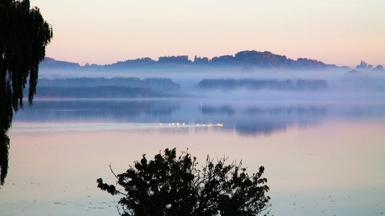 Monday morning. swans swimming  - carstenbuhl-2853 | ello
