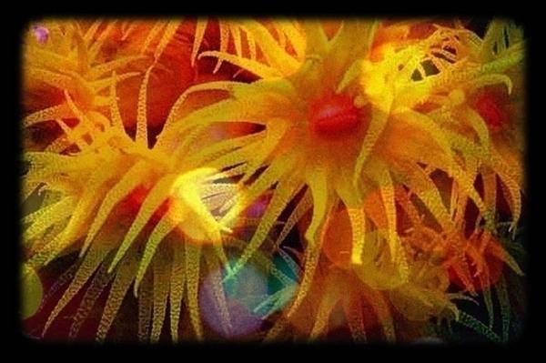 Jaques photographs coral 1 - jenniferreid-1004 | ello