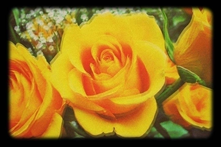 Floral diffusion yellow rose - jenniferreid-1004 | ello