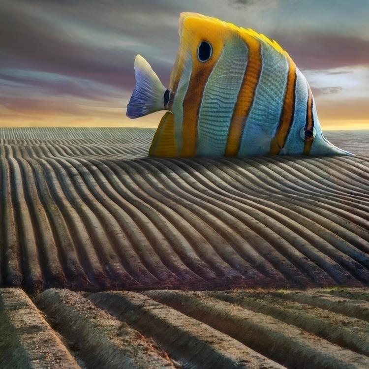 Big Fish - fish, surreal, field - kwadrart | ello