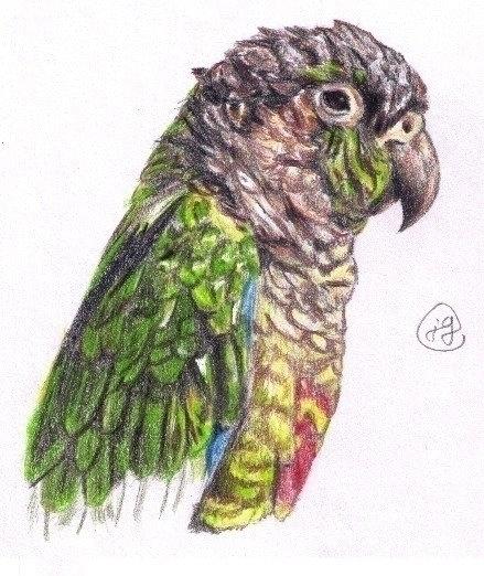 Parrot reference) Coloured Penc - juliagurevich | ello