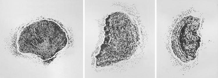 Fungus details - litography - gollo-1028 | ello