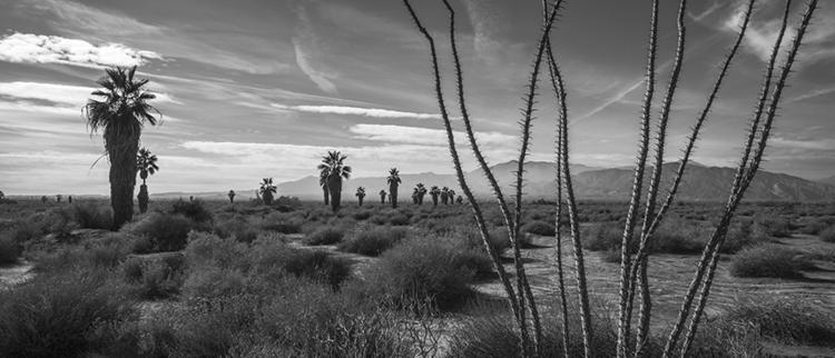 landscape - saltonsea, blackandwhite - frankfosterphotography | ello