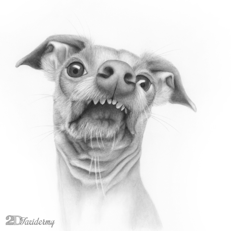 dog named Tuna - pencildrawing, portrait - 2dtaxidermy | ello