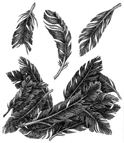 feathers, ink, penink, flying - kaytiespellz   ello