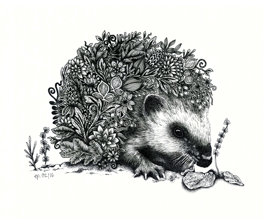flowery hedgehog. cutie - illustration - ellenparzer | ello