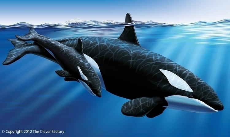 Orcas illustration Clever Facto - kerseygraphics | ello