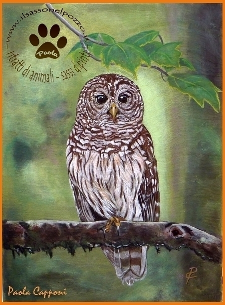 Barred owl - painting, barredowl - ilsassonelpozzo | ello