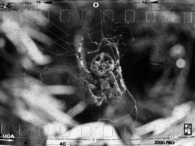 La muerte de ocho patas - photography - xochikalli | ello