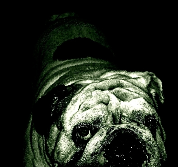 Gengis Khan - animals, bulldog, dog - stefanolazzaro | ello