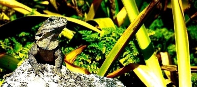 Vogue Chitaura - animals, iguana - stefanolazzaro   ello