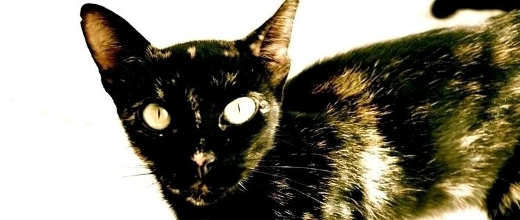 Tica - animals, cat, tica, photography - stefanolazzaro   ello