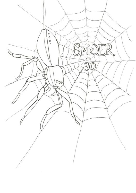 Lineart 30 Spider - illustration - hotshots2000 | ello