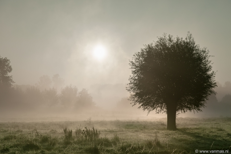 Ochtendmist - photography, mist - vanmas | ello