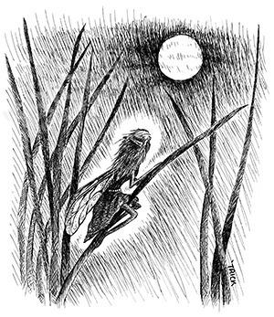 Moon Fairy - fairy, faery, fae, moonfairy - trick-6303 | ello