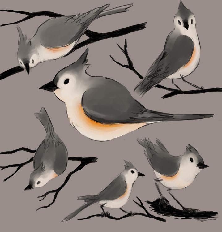 Birbs - illustration, birds, art - alexjohnston | ello