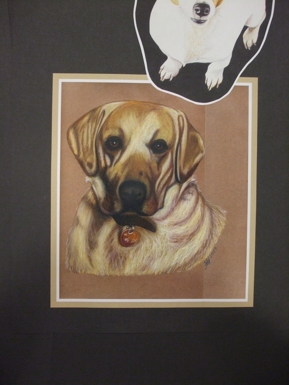 Fin Friendly Lab - drawing, portrait - stevenhart | ello
