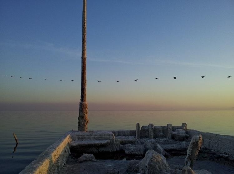 birds - saltonsea, bombaybeach, cellphonephotography - frankfosterphotography | ello