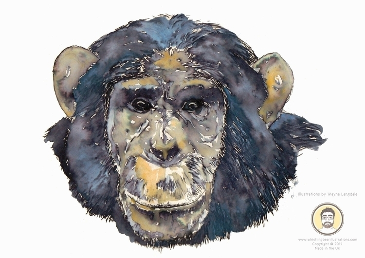 Chimp water colour ink - watercolour - whistlingbear | ello