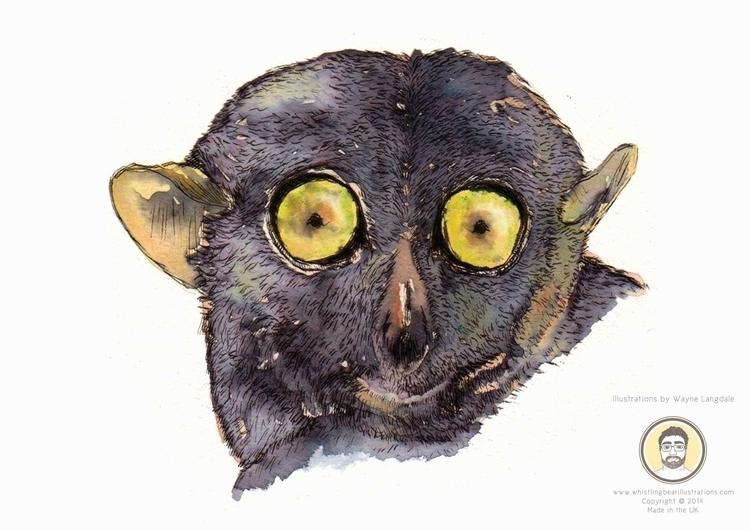 Tarsier water colour ink - tarsier - whistlingbear | ello