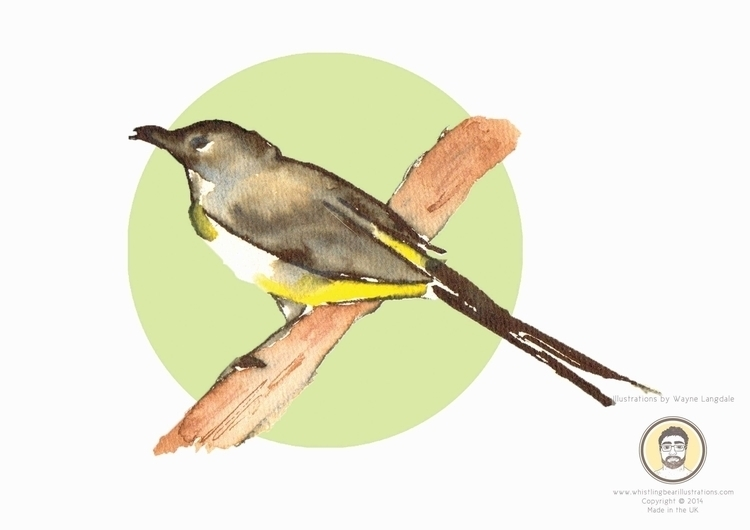 Grey Wagtail Birds project crea - whistlingbear | ello