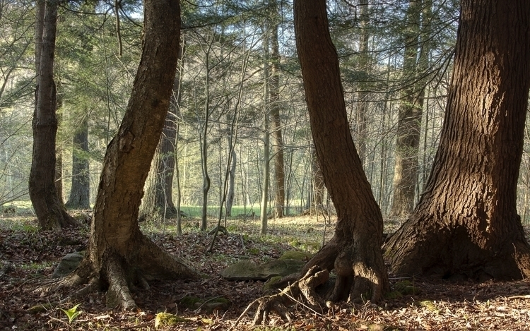 Twins - photography, nature, hdr - beatydigi | ello