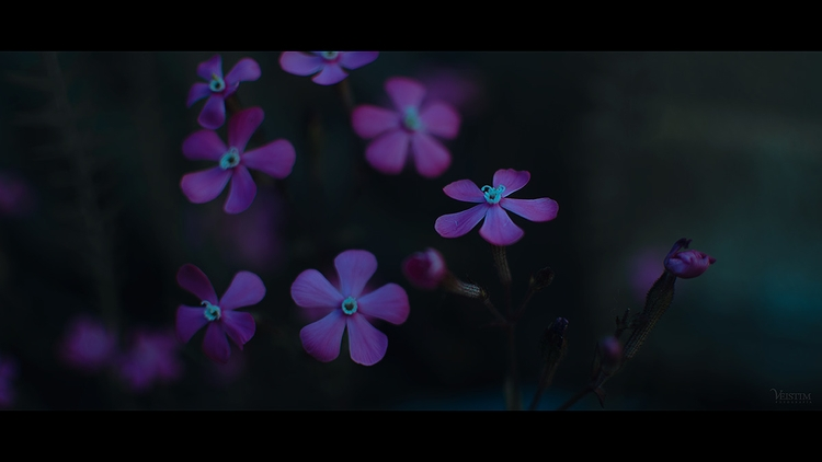 Myren - blue, plants, flowers, nature - veistim | ello