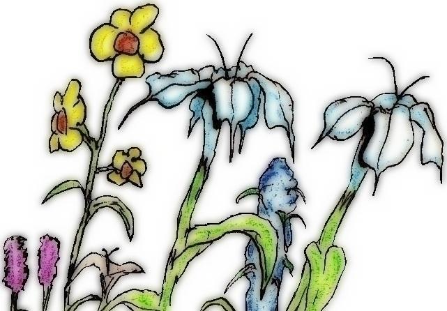 Blooms - illustration, drawing - cheechwiz   ello