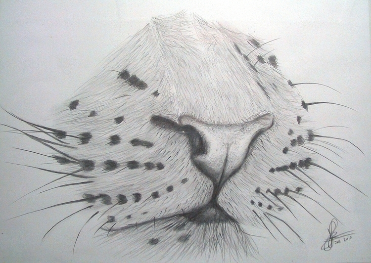 Leopard nose - drawing, sketch - marcossolis | ello