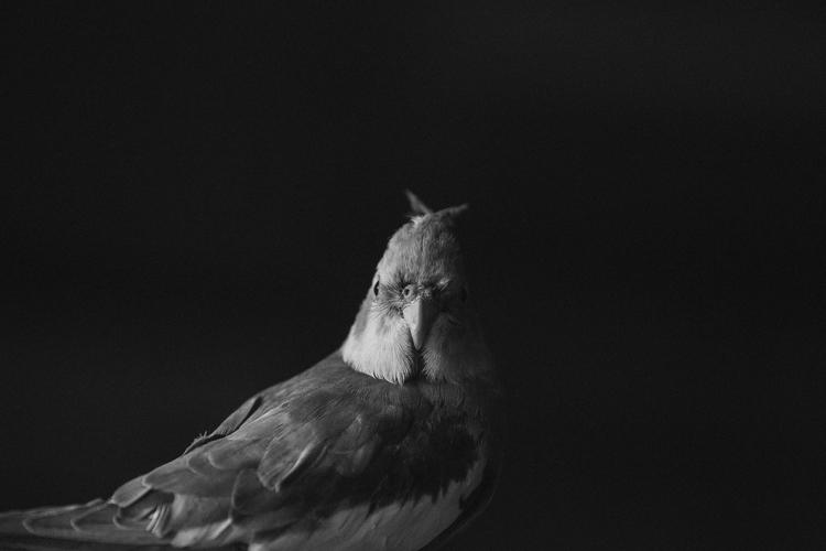 photography, blackandwhite - cataluna | ello