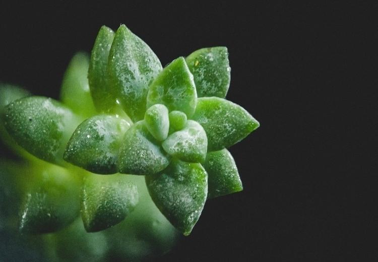 037 - herba - photography, macro - pebez   ello