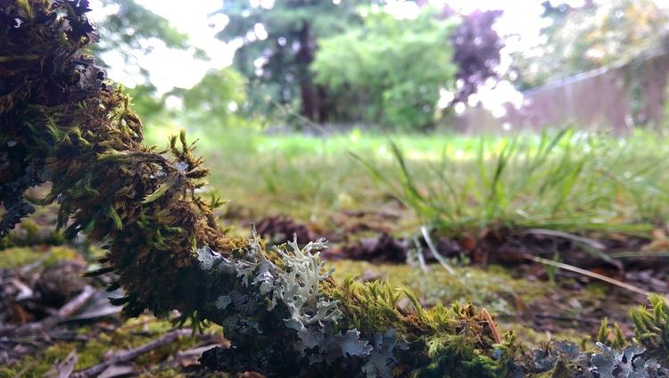 oregon, moss, plants, natural - weirdmike | ello