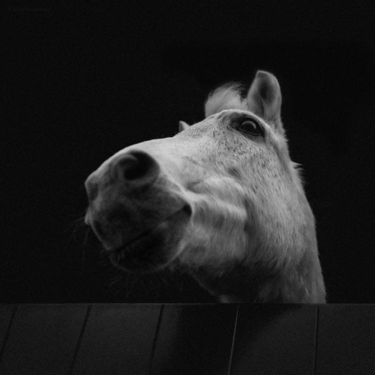 wanna ride - animals, blackandwhite - klaasphoto | ello