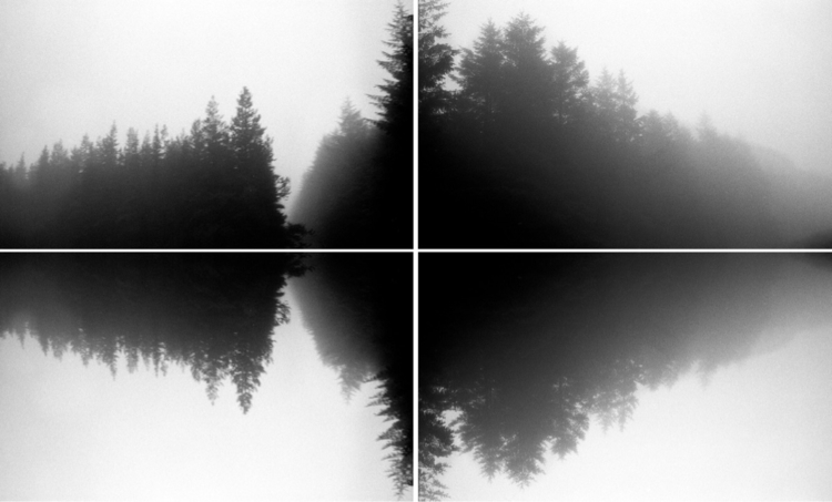 Pine Waves - leica, photography - jmo | ello