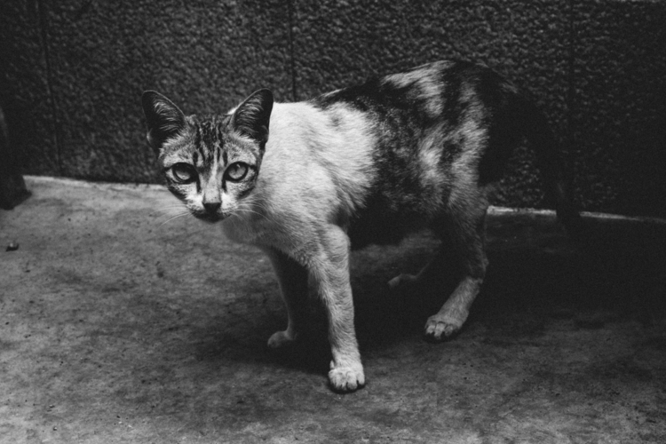 awareness (2017 - animal, asia, bangkok - edwardpalmquist | ello