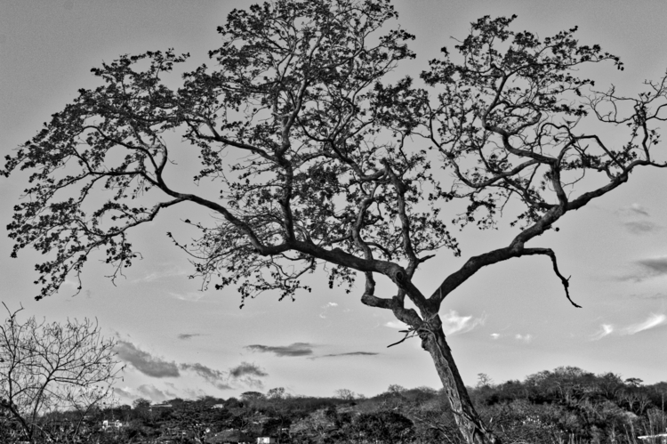 Lonely Tree - uninstaller   ello