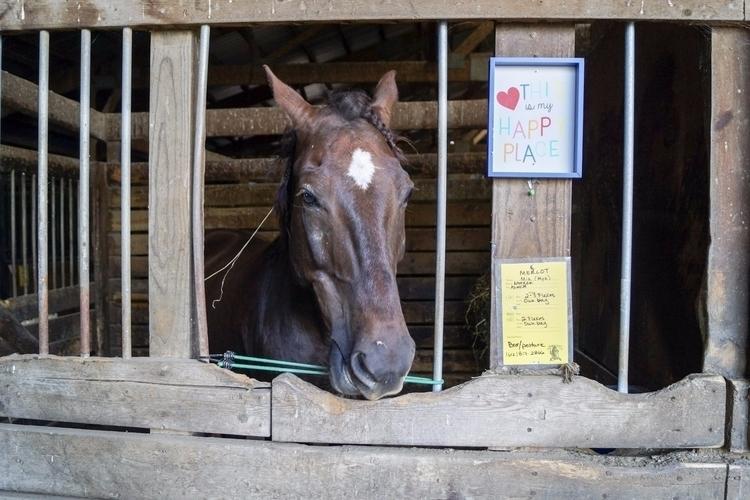happy place - photography, horses - tobecooked | ello