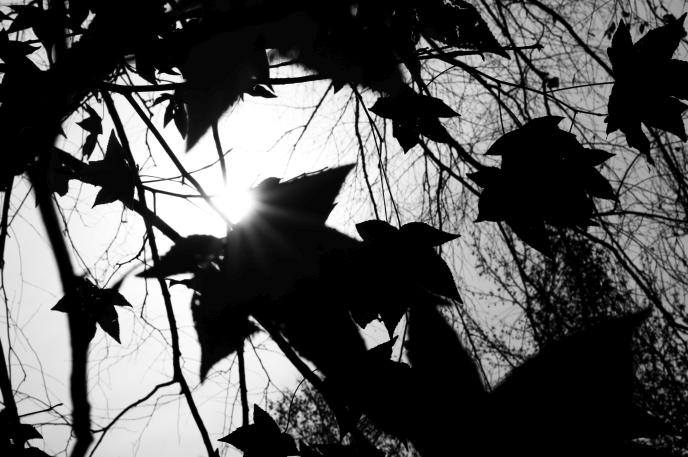 Writing Garden ~ Issue Fourteen - suzyhazelwood | ello