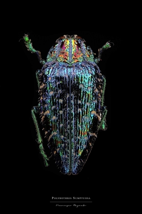 Entomology: Portraits Francesco - photogrist | ello